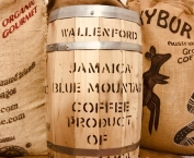 Caffè Verde - Jamaica Blue Mountain cr. 18 Wallenf...